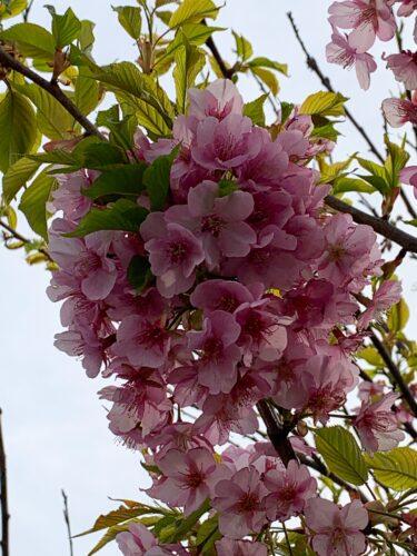 春はお花が美しい季節!
